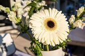 Bright daisy flower - gerbera