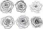 illustration with isolated black and white roses sketches