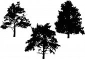 illustration with tree silhouettes isolated on white background