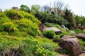 Landscaping, Arboretum Sofievka
