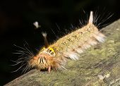 Hairy Caterpillar in the jungle