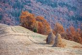 two haystack near autumn forest