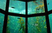 Aquarium Close-Up