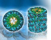 Molecular structure of protein Hemocyanin