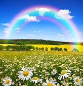 Rainbow above the spring landscape with field of marguerites
