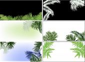 illustration with palm and fern leaves compositions