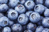 Freshly Picked Blueberry