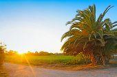 Palm At Dawn