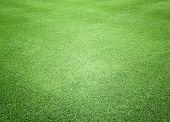 Greensward