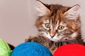 Kitten with clews of thread