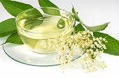 stock photo of elderly  - Cup with elder tea and fresh elder blossom - JPG