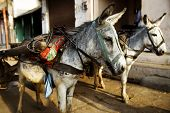 Donkeys waiting for riding tourists up and down the hills