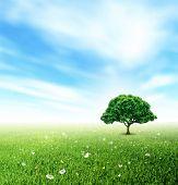 Summer, Landscape, Field, Sky, Tree, Grass, Flower And Butterflies