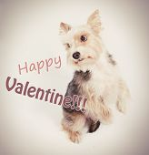 Happy valentine dog