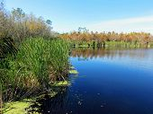 stock photo of mile  - Scenic Landscape at Six Mile Cypress Slough Preserve Florida - JPG