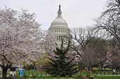 Early spring. Capitol.