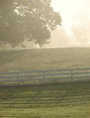 Meadow with White Wood Fence in Fog