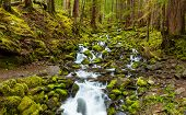 picture of olympic mountains  - cascade waterfall in the forest Olympic national park WA US - JPG