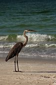 Egret at beach