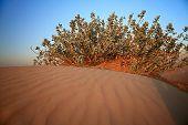 Shrubs in the sandy desert.