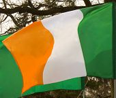 picture of irish flag  - Irish flag on background of trees recorded in Moscow park in celebration of St - JPG