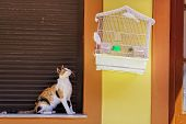 picture of stare  - cat is staring at a bird in cage - JPG