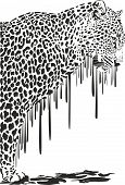 Leopard, abstract painting on a white background
