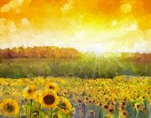 stock photo of sunflower  - Sunflower flower blossom - JPG