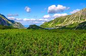 foto of dwarf  - Picturesque view over dwarf pine trees lake and summits in Five Pond Valley in Tatra mountains - JPG