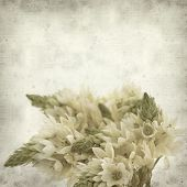 foto of bethlehem  - textured old paper background with start of bethlehem flowers - JPG