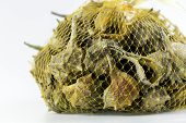 image of edible  - Market bag of Bolinus brandaris an edible marine gastropod mollusk known as the purple dye murex or the spiny dye - JPG