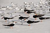 foto of flock seagulls  - A Group of Seagulls walking on the Beach  - JPG