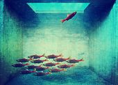 Постер, плакат: one fish swimming the opposite way the rest of the school is toned with a retro vintage instagram fi
