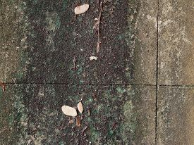 foto of green algae  - concrete wall with grunge texture and moss green algae - JPG