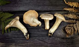 image of chanterelle mushroom  - chanterelle mushrooms and grass  on the wooden background   - JPG