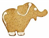 Gingerbread cookie with clipping path