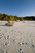 picture of mckenzie  - foot prints in the sand at lake mckenzie australia - JPG