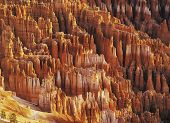 Hodoos In Bryce Canyon National Park
