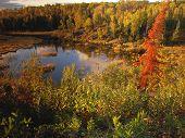 Autumn View, Northern Minnesota