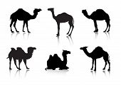 From A Series Silhouettes. Animals. A Camel