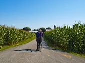 stock photo of horse plowing  - Amish Farmer in the county of Lancaster - JPG