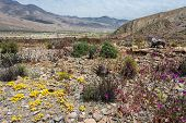 Постер, плакат: Flowering Desert In The Chilean Atacama Desert