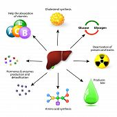 Liver Functions poster