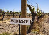 Signo de la bodega con viñas viejas