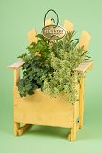 Mixed Fresh Herbs in a Wood Planter
