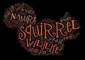 Wordcloud of squirrel