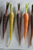 Overhead view of carrots arranged side by side on table poster