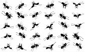 Beetles Fight