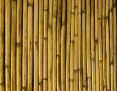 Dried Bamboo Tinted