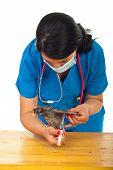 Veterinary Vaccine Chicken poster